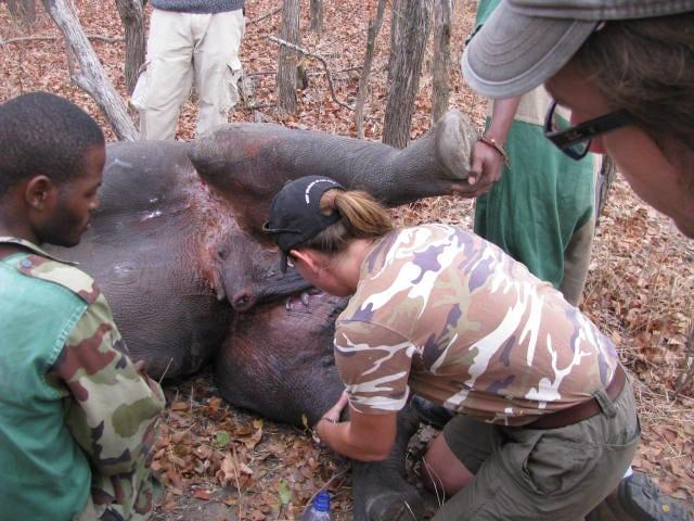 08 Sept rhino