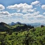 Dedza mountain reserve