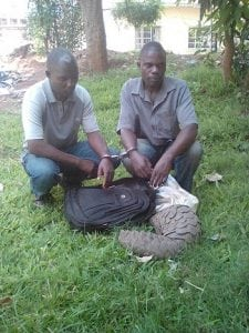 pangolin traffickers