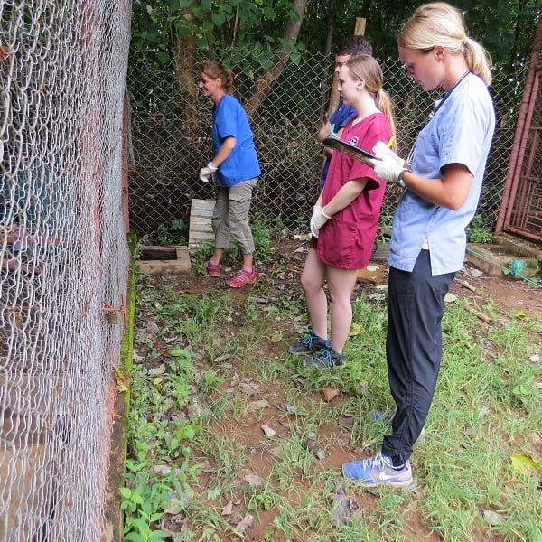 Students observing wildlife during rehabilitation process