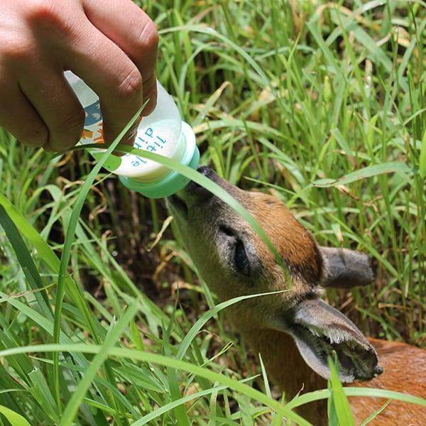 Wildlife Rescue Malawi