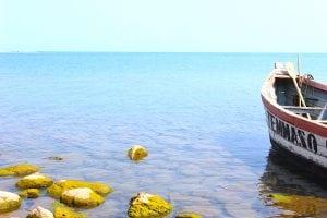 Biodiversity in Lake Malawi