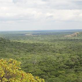 Hippo in Kasungu