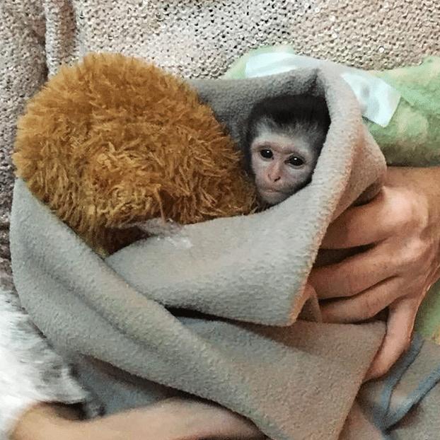 Adopt Kumbali