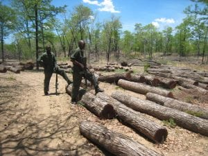 Deforestation Lengwe National Park Malawi
