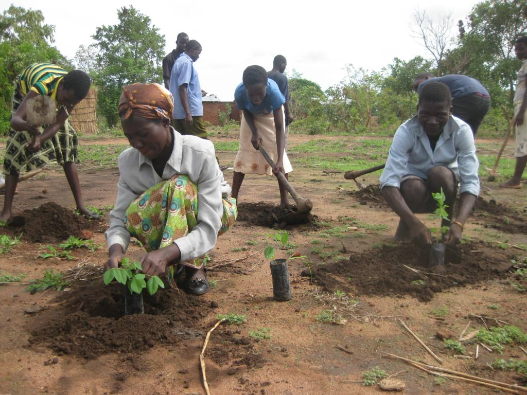 Community tree planting Malawi