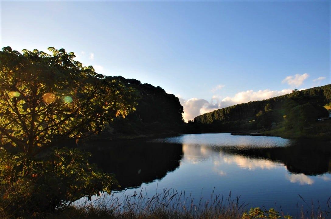 Biodiversity in Nyika