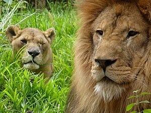 Simba and Bella