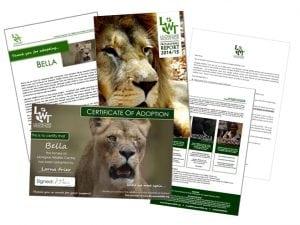 Simba certificate web