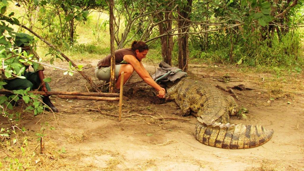 als croc 1