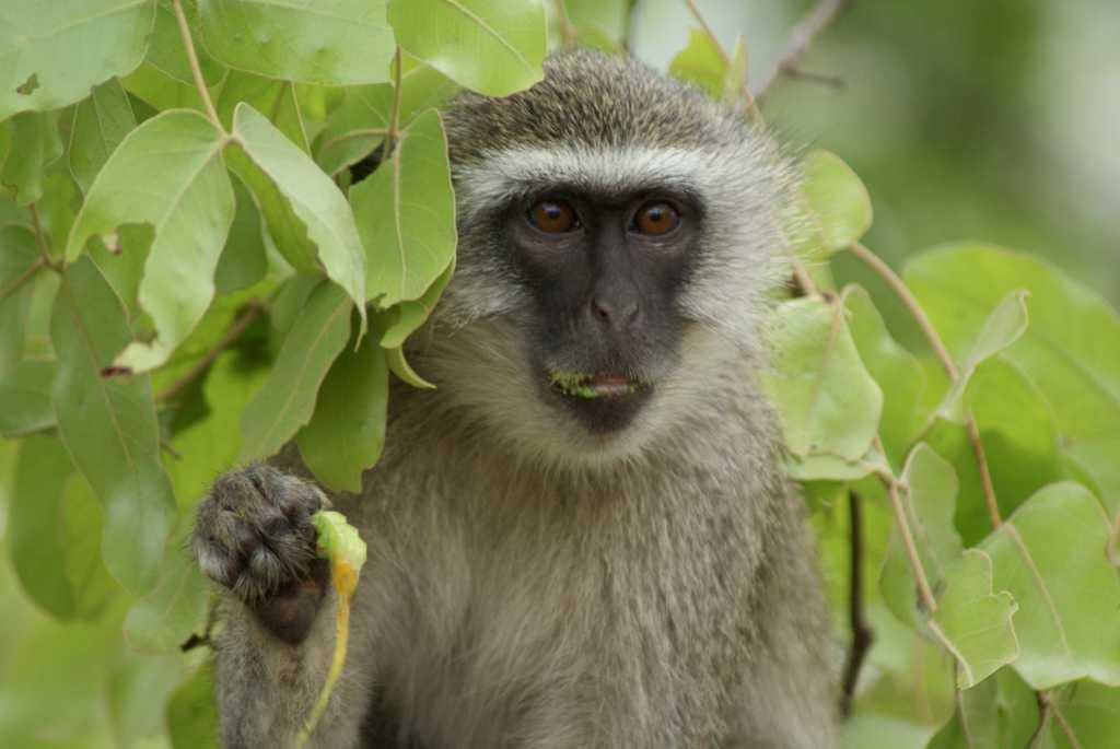 Donate wildlife malawi