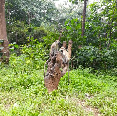 Orphan Monkeys