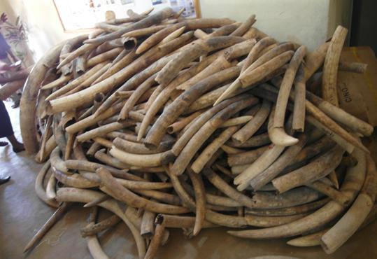 ivory_haul_malawi