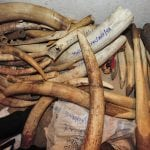Ivory recovered from poachers The locks on the door of a secret strong room where Malawi has stored recovered Ivory. © Picture by Mark Kehoe January 2017 mark.kehoe@btinternet.com 0044 7831 524 096