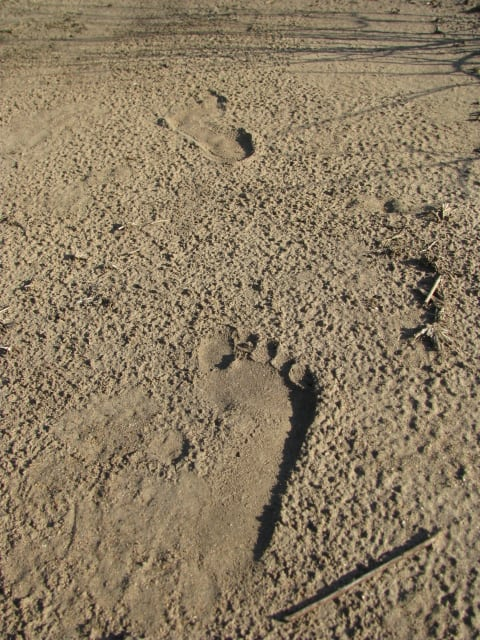poacher footprints