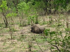 rhino09