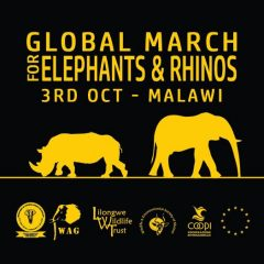 WE'RE MARCHING FOR ELEPHANTS & RHINOS ON FRIDAY. PLEASE HELP US!
