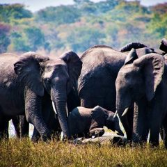 MALAWI REMAINS FREE FROM TROPHY HUNTING!