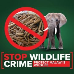 ONE YEAR ON: MALAWI'S FIGHT AGAINST WILDLIFE CRIME