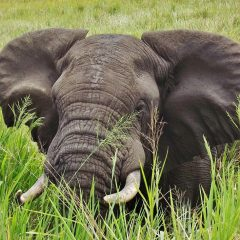 LWT SUPPORTS LETTER AGAINST FRENCH IVORY TRADE