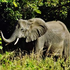 MALAWI: NATION TO CELEBRATE GLOBAL WILDLIFE DAY ON 2 APRIL