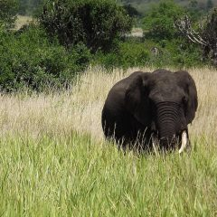 MALAWI MAY HAVE NO ELEPHANTS BY 2025