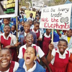 MALAWI ANNOUNCES IVORY BURN