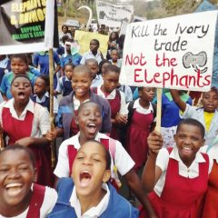 MALAWI ANNOUNCES IVORY BURN