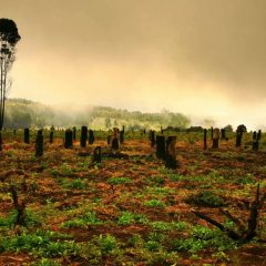 FIGHTING FOR MALAWI'S FORESTS