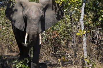 Malawi announces milestone achievements at CITES conference