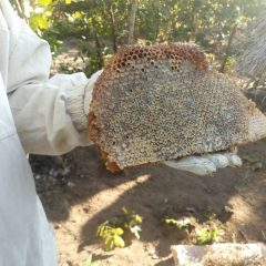 FROM TRAINING TO SERVING – THE CYCLE OF A HONEY HARVEST