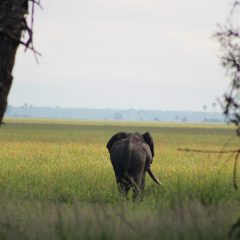 THE ELEPHANT WARS: MALAWI LEADS THE FIGHT AGAINST ILLEGAL WILDLIFE CRIME