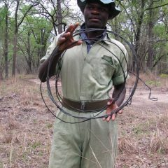 LIONS & RHINOS & SNARES (OH MY!)