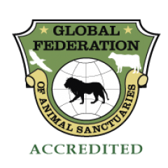 LWC IS ACCREDITED BY THE GLOBAL FEDERATION OF ANIMAL SANCTUARIES (GFAS)