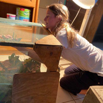 Hayley vet extern reaching for chameleon inside LWT vet clinic