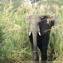 WILDLIFE OFFENCES LAND CULPRITS CUSTODIAL SENTENCES