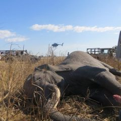 LWT HELPS WITH ELEPHANT TRANSLOCATION