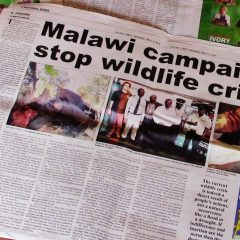 BUMPER WWD COVERAGE FOR STOP WILDLIFE CRIME CAMPAIGN