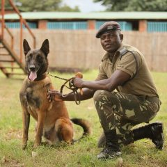 DETECTION DOGS TRAINED ON ENDANGERED TREE SPECIES