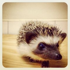 MEET OUR PRICKLY FRIEND PICKLES