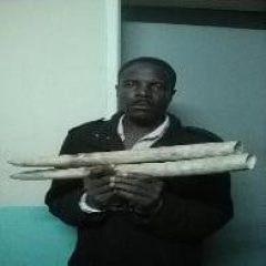 FROM A $40 FINE TO 4 YEARS BEHIND BARS FOR IVORY TRAFFICKING