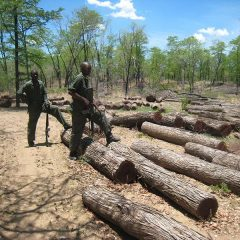 MPCC TAKES ACTION ON MALAWI'S FORESTS