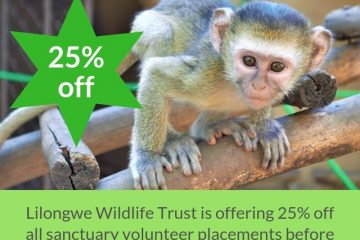 25% OFF ALL SANCTUARY VOLUNTEER PLACEMENTS FOR ORPHAN SEASON!