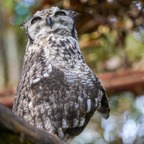 Spotty the owl at LWC Summer 2019_LWC_sanctuary