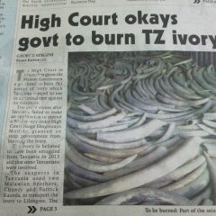HIGH COURT OKAYS GOVERNMENT TO BURN TZ IVORY