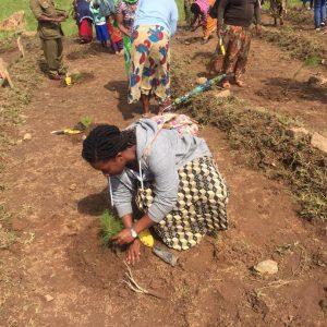 Yolanda tree planting
