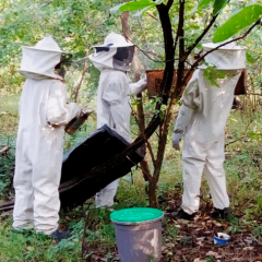 BEEKEEPING PROJECT CAUSES A BUZZ
