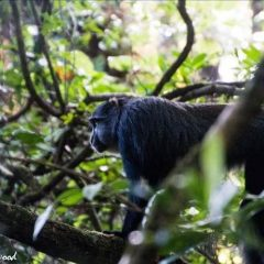 MAX THE BLUE MONKEY IS RELEASED