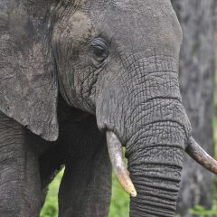 13 YEARS FOR KILLING AN ELEPHANT