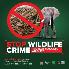 'STOP WILDLIFE CRIME' CAMPAIGN SHORTLISTED FOR AWARD